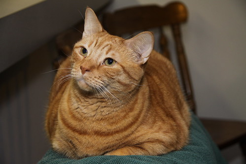 This is a fat kitty