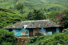 Old house between tea plantations