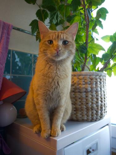 New Cats 89.jpg