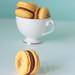 Mogador macarons