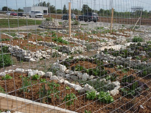 How To Get Keyhole Gardens To Fit My Rectangular Veggie Patch Permaculture Forum At Permies