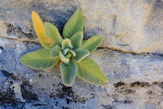 Fuzzy plant