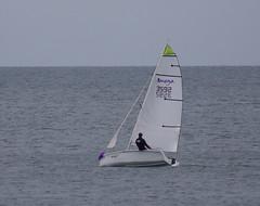 yacht racing, sail, sailboat, sailing, sailboat racing, dinghy, vehicle, sailing, sports, skiff, windsports, mast, wind, watercraft, scow, dinghy sailing, boat,