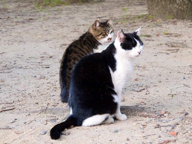 Wandering Cats