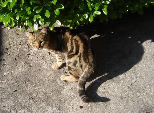 surullinen kissa by Anna Amnell