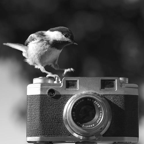 Dirty Camera Bird