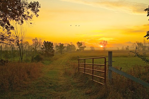 usa sunrise gates swamp marsh sandhillcranes marshmorning johnhenrygremmer wisconsinmorning