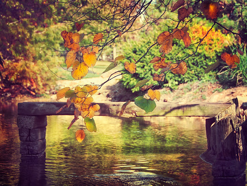 autumn light tree fall leaves pond missouri springfield ripples sublime japanesestrollgarden jessicadrossintextures pixelmama