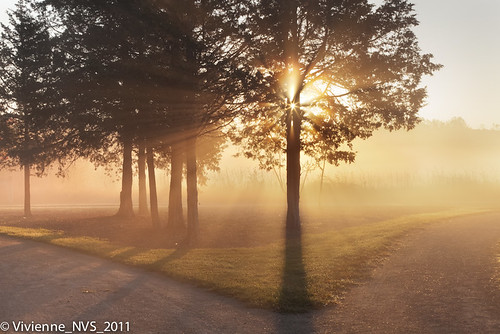 mist fog sunrise illinois preserves sunbeams lakecounty foggyscenes lakecountyforestpreserves halfdayforestpreserve lcfpd halfdaypond