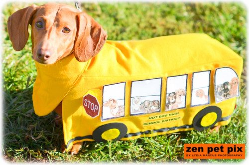 doxie-bus-1