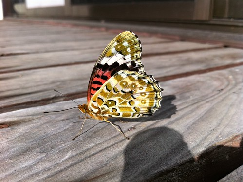 2011-10-29 at 09.20.16 a butterfly