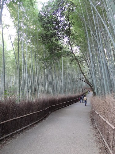 Bamboo forest by girl from finito