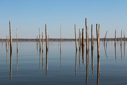 lake landscape texas tx stumps