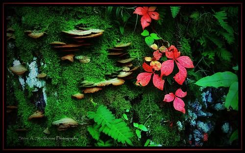 autumn trees fall nature landscape florida fl virginiacreeper