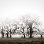 #302 Nebel_2011-11-09_P1010106-Bearbeitet