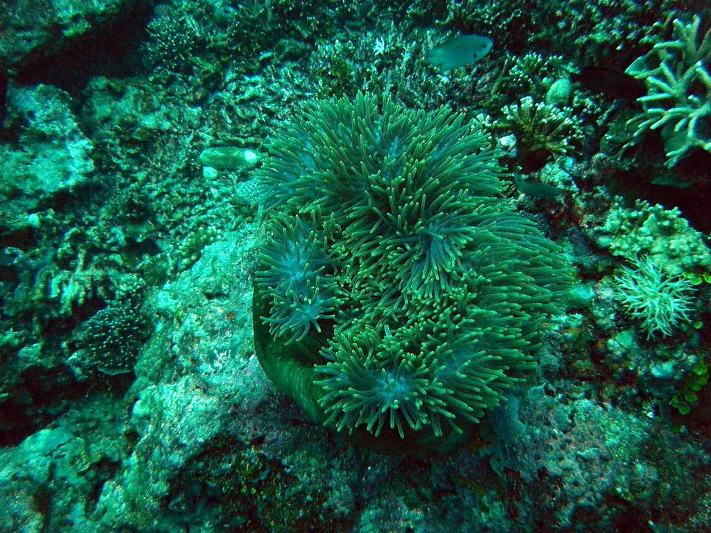 Mantanani Island 體驗潛水