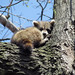 """185/365 """"Baby raccoon"""" (Explored front page) by Beth Duri"""