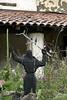 • San Francesco & Birds, Carmel Mission, California US by Artamia
