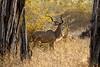Male Kudu by Vertical Planar - planars.wordpress.com