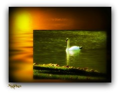 The Sun ~ Water and a Swan
