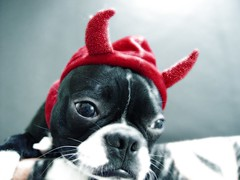 """Oct 27 2011 [Day 361] Bonus """"Why Yes, I Am A Little Devil"""""""