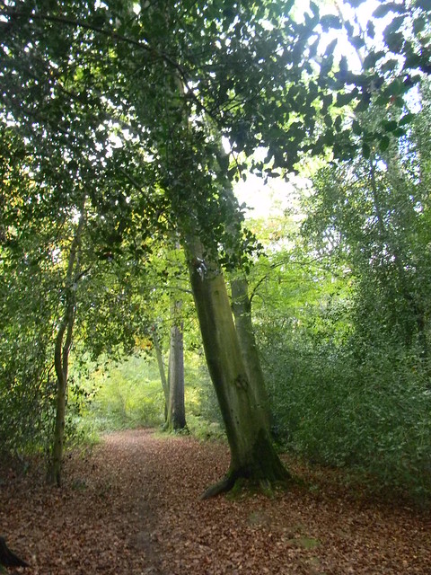 Witley Copse and Mariners Rewe