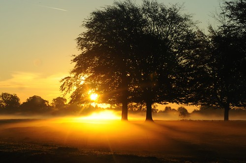 trees sun sunrise october shine branches stroud rodborough minchinhampton