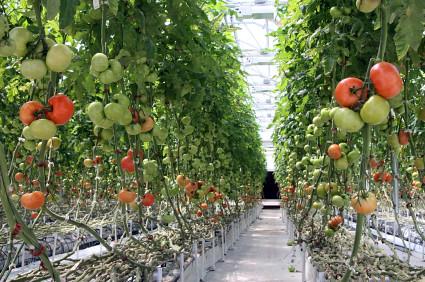 ideal greenhouse temperature