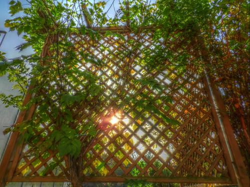 Garten_Palisade_Rankpflanze