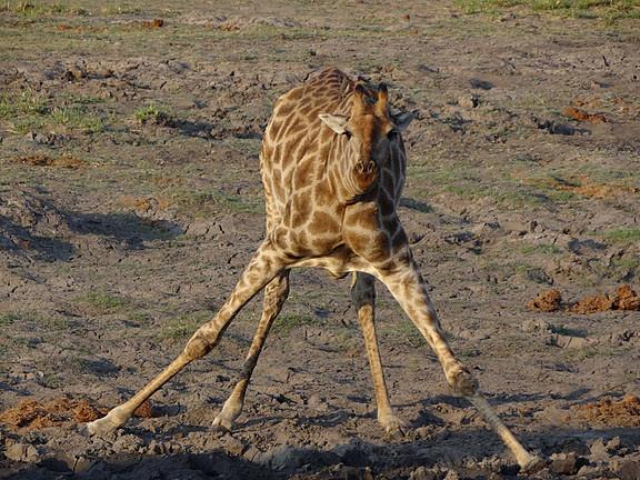 Wildlife Photography: Wildlife Photographer Jobs In Africa
