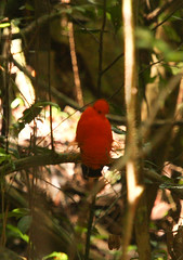 Guyana-0614