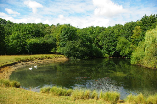 20110814-07_Duck Pond - Brown's Spinney nr Little Lawford by gary.hadden