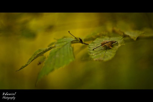 Leaf grief