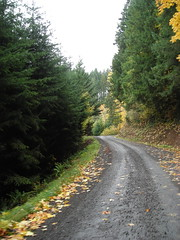 Dixie Mountain Road winds through the trees