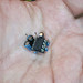 """DIY: """"vso"""" - a Very Small Oscillator (lm311) by linux-works"""