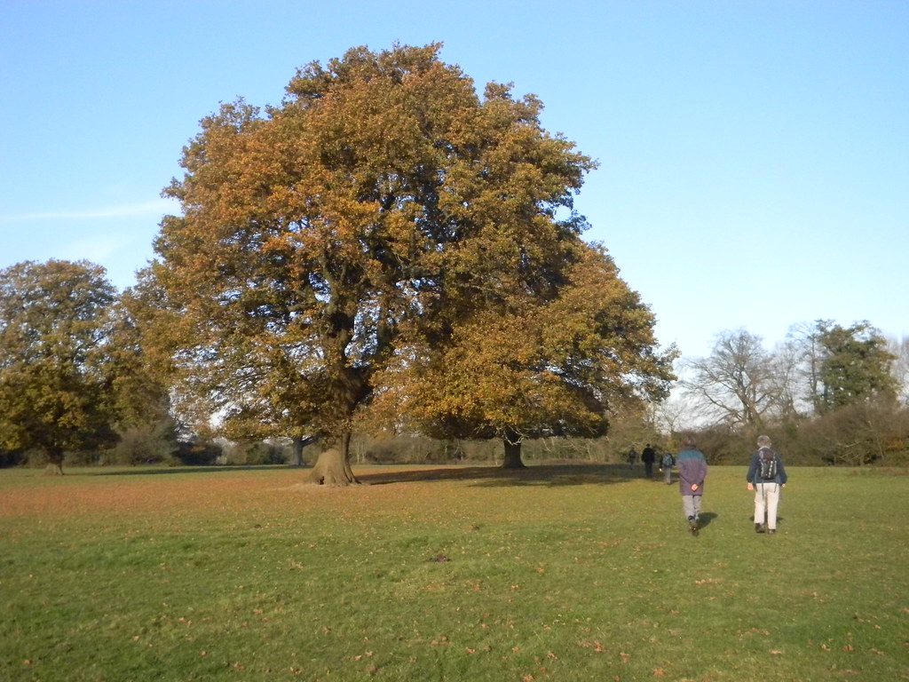 "Majestic oaks ""Head for a hidden stile .... passing to the right of two large oak trees"" New Addington to Hayes"