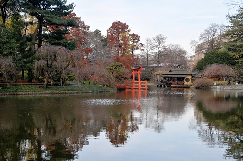 Fall at the Koi Pond