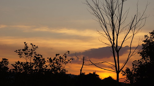 trees sunset sky plants clouds newhampshire concord
