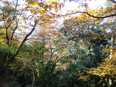 高尾山20111124-031