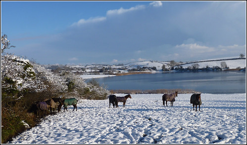 Horses in the December snow