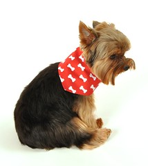 SimplyDog Red Bone Bandana