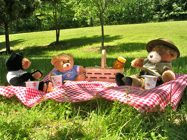 Free Fun Things to Do With Family - LE - Teddy Bear Picnic