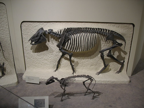 Ancient tapiroids