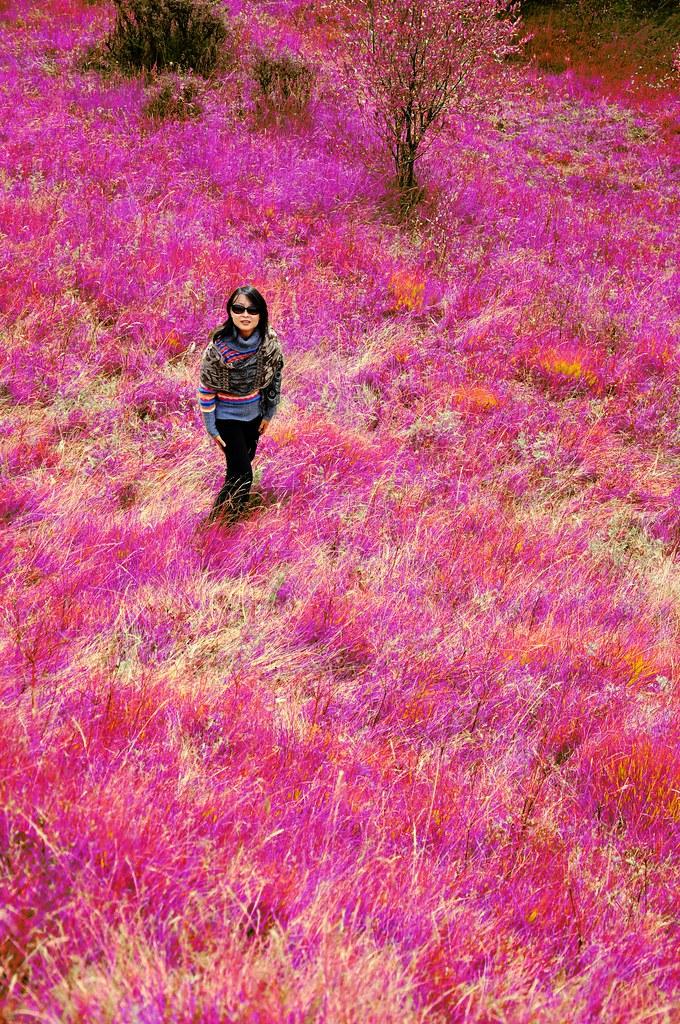 红原·红草地