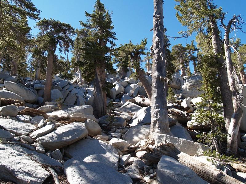 Boulder-Whacking