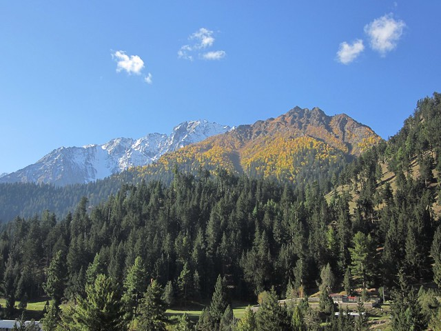 Naltar valley.
