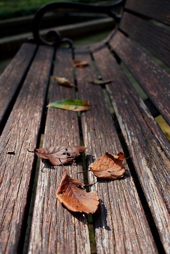 park autumn fall nature leaves bench leaf deadleaves fallenleaves mzuikodigital17mmf28 olympuspenep3 photoholicimage