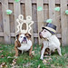Happy 5th Birthday, Chloe & Dexter! by erin garrison studio