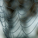 Morning Dew on a Spider Web by Judy Rushing