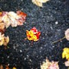 Leaf on fire #fall